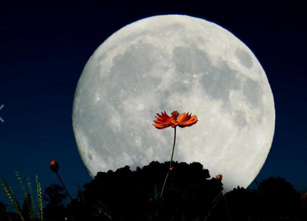中秋节月亮图片2016 无水印版