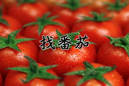 找番茄全关卡破解版