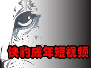 快豹短视频预览图