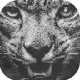 雪豹���|助手免�M版app下�dv1.0.0安卓版