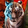 Animal Clash安卓最新汉化版v1.4