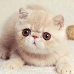 猫咪软件库蓝奏云合集版v2.0.2