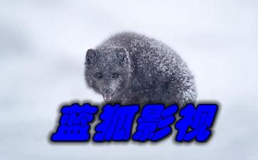 蓝狐影视预览图