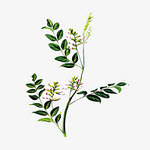 中药植物百科app最新版v2.0.1